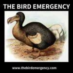 The Bird Emergency