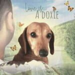 Love Is A Doxie