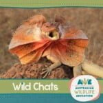 Australian Wildlife Education: Wild Chats