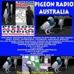Pigeon Radio Australia