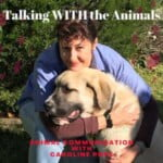 Talking With The Animals. Animal Communication With Caroline Pope