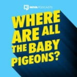 Where Are All The Baby Pigeons?